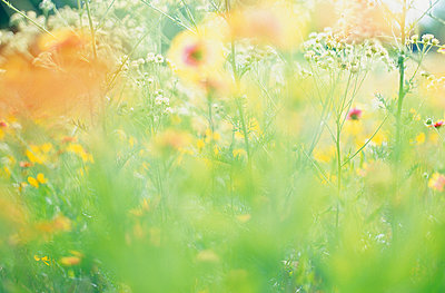 Field of wildflowers in summer, close up - p924m663858 by Angela Bird