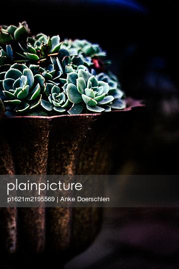 p1621m2195569 by Anke Doerschlen