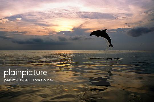 p442m2012045 von Tom Soucek