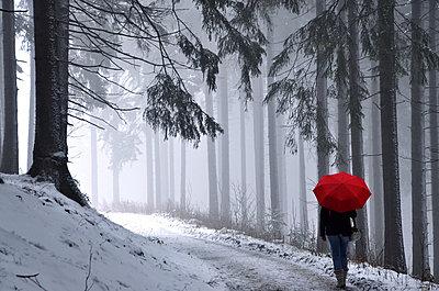 Winterwald - p148m971770 von Axel Biewer