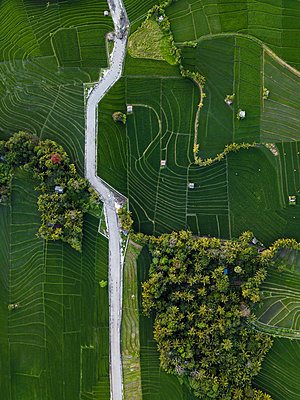 Indonesia, Bali, Aerial view of rice fields - p300m2042496 by Konstantin Trubavin