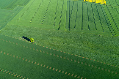 Aerial View of landscape with solitude tree in meadow and agricultural fields, springtime, Franconia, Bavaria, Germany - p300m2114950 by Martin Rügner