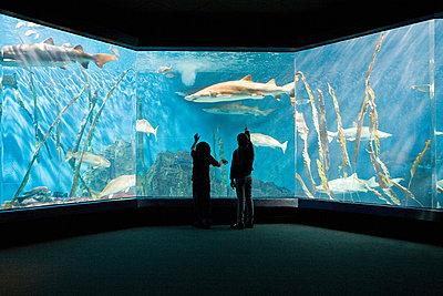 Children watching fish in aquarium - p9243227f by Image Source