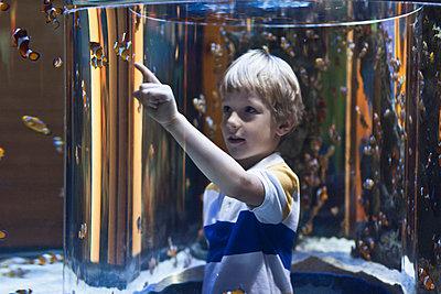 Boy admiring fish in aquarium - p42917175f by Hybrid Images