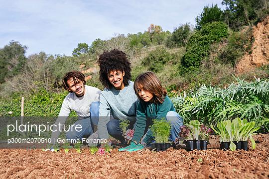 Family planting lettuce seedlings in vegetable garden - p300m2070510 by Gemma Ferrando