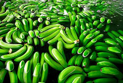 Banana peel - p1205m1040776 by Josef Polleross
