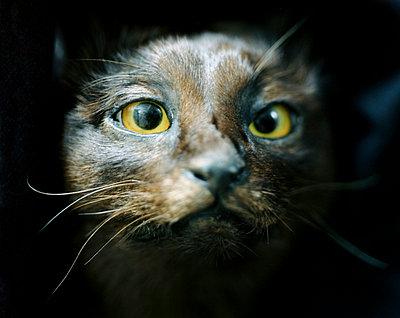 Ausgestopfte Katze - p9450011 von aurelia frey