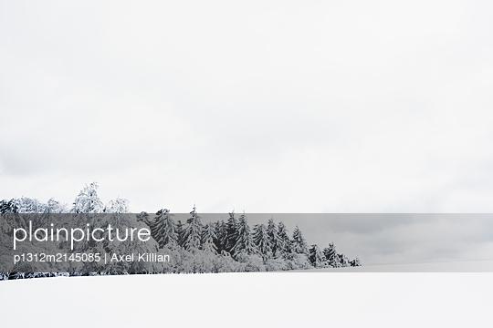 Waldstück im Winter mit Wiese bei Eis und Schnee - p1312m2145085 von Axel Killian