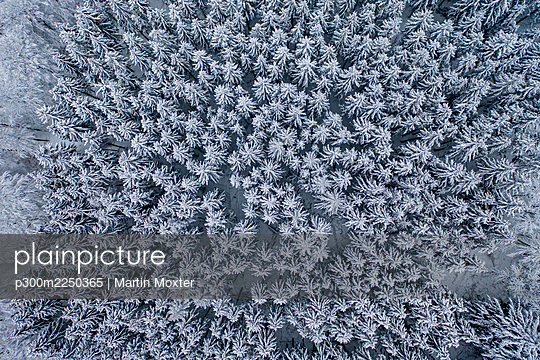 Helicopter view of snow-covered forest - p300m2250365 by Martin Moxter