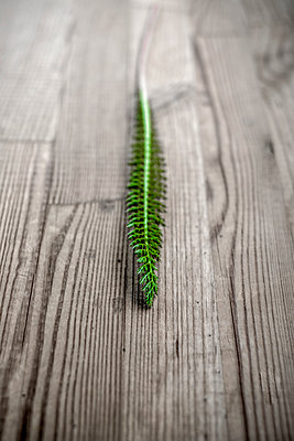 Fern grass on a wooden surface - p1228m1584136 by Benjamin Harte