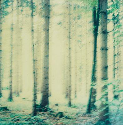 Wald - p1421m1476788 von Simon Fröhlich