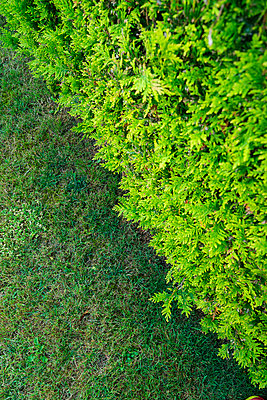 Hedge and lawn - p427m1515714 by Ralf Mohr
