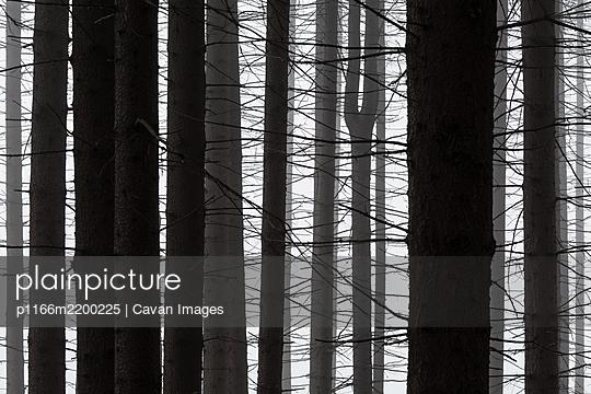 Turiec region, Slovakia. - p1166m2200225 by Cavan Images