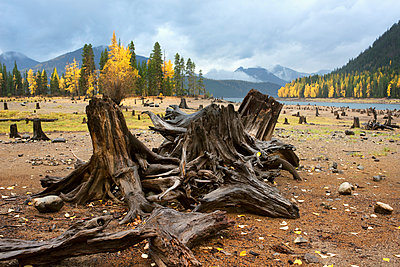 Dead trees on field at North Cascades National Park - p1166m1163720 by Cavan Images