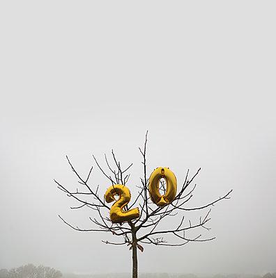 Goldene Ballons in einem kleinen Baum - p1519m2134488 von Soany Guigand