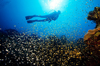 Silhouetted diver with school of fishes underwater - p3485702 by Kimmo Hagman