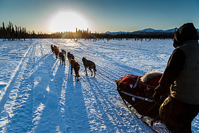 Hugh Neff runs down the trail after leaving the Kaltag checkpoint near sunset during the 2016 Iditarod, Alaska - p442m1193237 by Design Pics