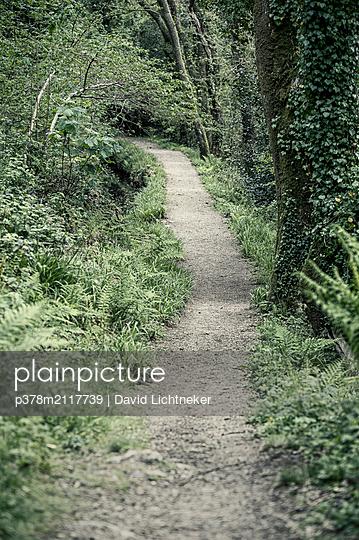 Path through forest - p378m2117739 by David Lichtneker