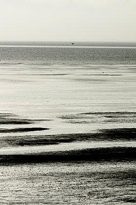 Mudflats in the Wadden sea - p1144m944012 by Nico van  Kappel