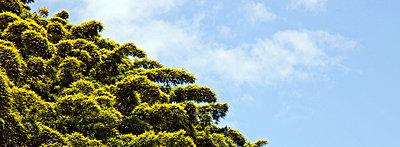 Bambou forest - p7050109 by Florian Tröscher