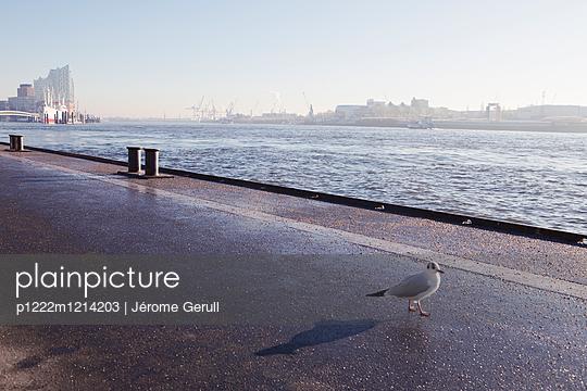 Elbphilharmonie - p1222m1214203 von Jérome Gerull
