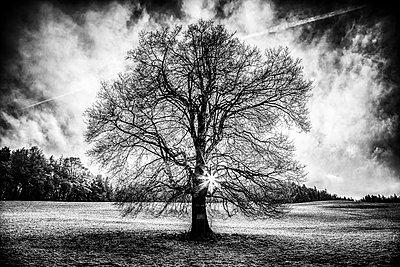 Baum - p1205m1515929 von Toni Anzenberger