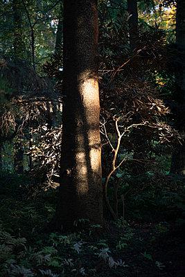 Tree trunk - p1229m2133052 by noa-mar