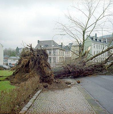 Storm - p387m900818 by Patricia Eichert