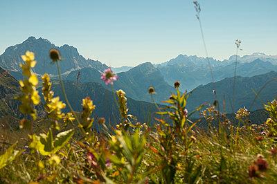 Blumenwiese in den Dolomiten - p470m1190150 von Ingrid Michel