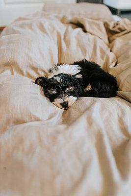 Sleepy puppy - p1507m2172830 by Emma Grann