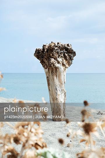 Baumstamm am Strand - p1423m2020598 von JUAN MOYANO
