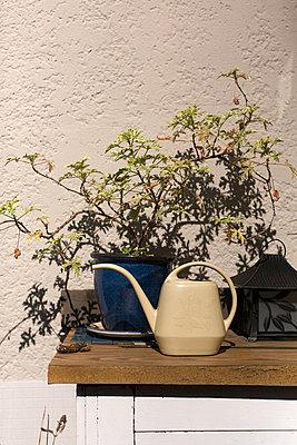 Topfpflanze im Freien - p1094m900200 von Patrick Strattner