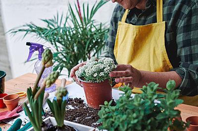 Woman preparing home garden plants in spring - p1166m2261944 by Cavan Images