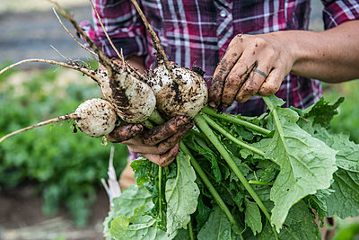 A woman holds freshly harvested white radishes at an organic farm in Washington State. - p1424m1500516 by Alasdair Turner