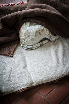 Watchdog taking a nap - p403m937578 by Helge Sauber