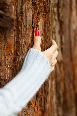 Einen Baum fühlen - p045m1474736 von Jasmin Sander
