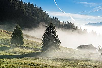 Morgennebel - p954m1185245 von Heidi Mayer