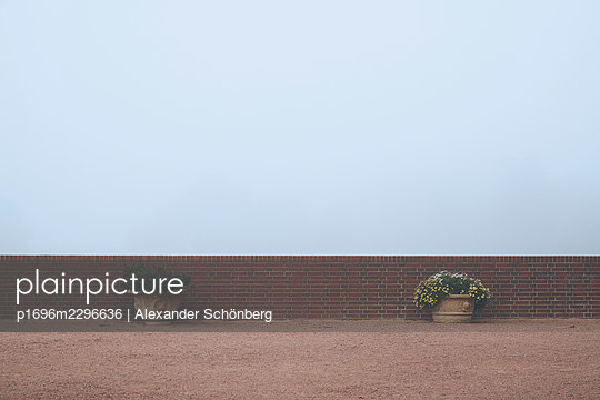 Two flowerpots in front of screen of fog - p1696m2296636 by Alexander Schönberg