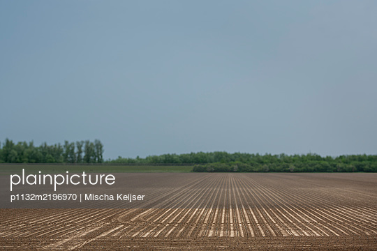 Field - p1132m2196970 by Mischa Keijser