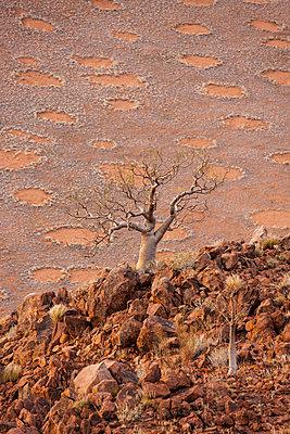 Namib Desert, Namibia, Africa - p871m1082243 by Neil Emmerson