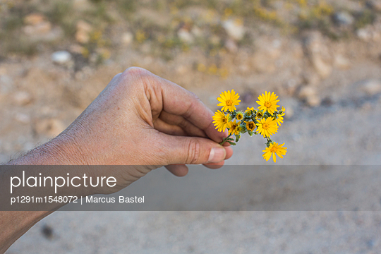 Holding a flower - p1291m1548072 by Marcus Bastel
