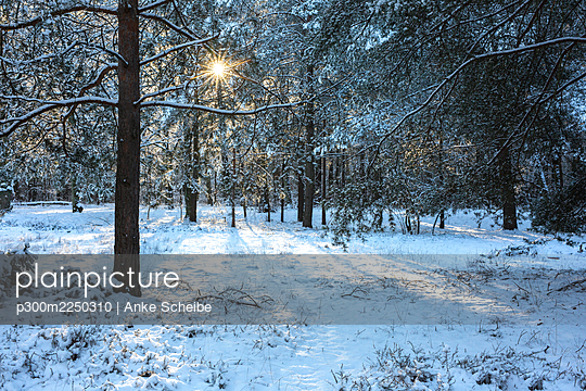 Germany, Brandenburg, Forest in winter at sunrise - p300m2250310 by Anke Scheibe