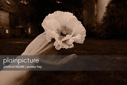 Poppy on woman's hand - p945m2182289 by aurelia frey