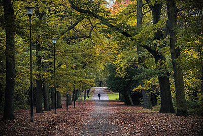 Dog walkers, Norfolk Park, Sheffield, Yorkshire, England, United Kingdom - p871m2113671 by Bill Ward
