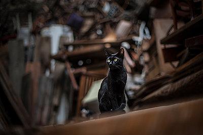 Black cat - p1007m1134892 by Tilby Vattard