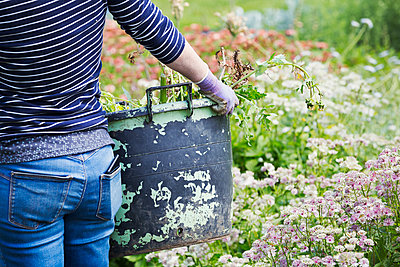 A woman carrying a large garden bucket through flowers in a flowering bed.  - p1100m1178039 by Mint Images