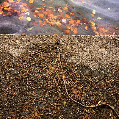Rope on an embankment - p8130172 by B.Jaubert