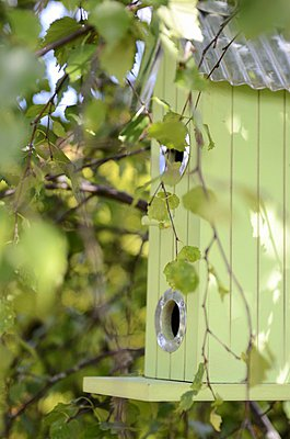 Pastel green bird box hanging in tree - p1183m997102 by Chatelain, Sonia