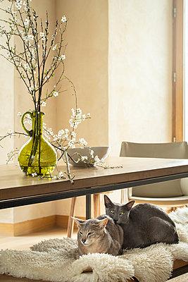 Zwei Katzen kuscheln auf einer Bank vor einem Tisch mit einer grünen Vase mit Blütenzweig. - p948m2134098 von Sibylle Pietrek