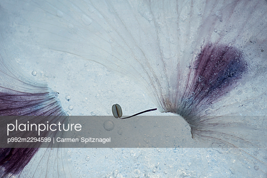 p992m2294599 by Carmen Spitznagel